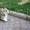 Вельш Корги Пемброк щенки из питомника «Nivas Joy»   #1582549